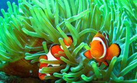 Waspadai Hewan Laut Saat Snorkeling
